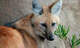 بالصور معلومات عن الحيوانات , اسرار عن عالم الحيوان 4873 3 275x165