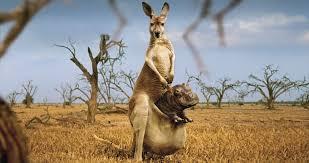 صورة صور حيوانات مضحكة , اجمل الرمزيات المضحكه للحيوانات 4937 1