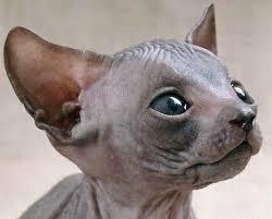 صورة صور حيوانات مضحكة , اجمل الرمزيات المضحكه للحيوانات 4937 2