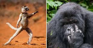 صورة صور حيوانات مضحكة , اجمل الرمزيات المضحكه للحيوانات 4937 3