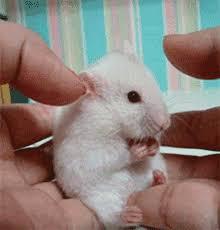 صورة صور حيوانات مضحكة , اجمل الرمزيات المضحكه للحيوانات 4937 6
