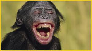 صورة صور حيوانات مضحكة , اجمل الرمزيات المضحكه للحيوانات 4937 7