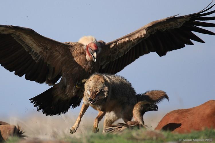 بالصور اكبر طائر في العالم , الطائر الاكبر في العالم 5545 1