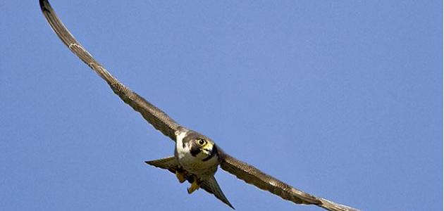 بالصور اكبر طائر في العالم , الطائر الاكبر في العالم 5545
