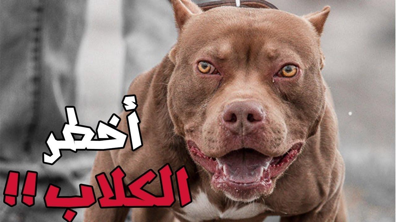 صور اشرس انواع الكلاب , اخطر الكلاب الشرسه