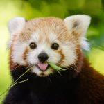 صور حيوانات , حيوانات اليفة جميله