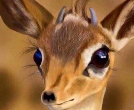 صورة عيون الريم , صور رائعة لعيون الريم