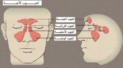 صورة علاج حساسية الانف , العلاج السحري لحساسيه الانف