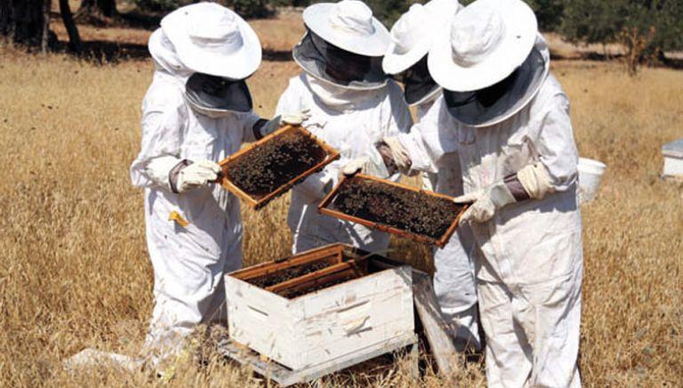 صورة تربية النحل , نصائح لتربيه النحل 1430 1