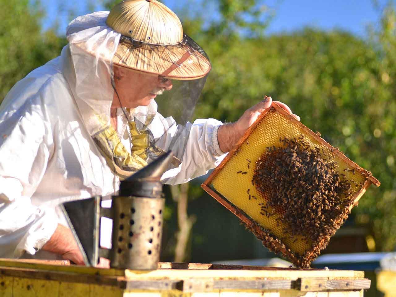 صورة تربية النحل , نصائح لتربيه النحل 1430 2