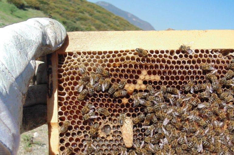 صورة تربية النحل , نصائح لتربيه النحل 1430