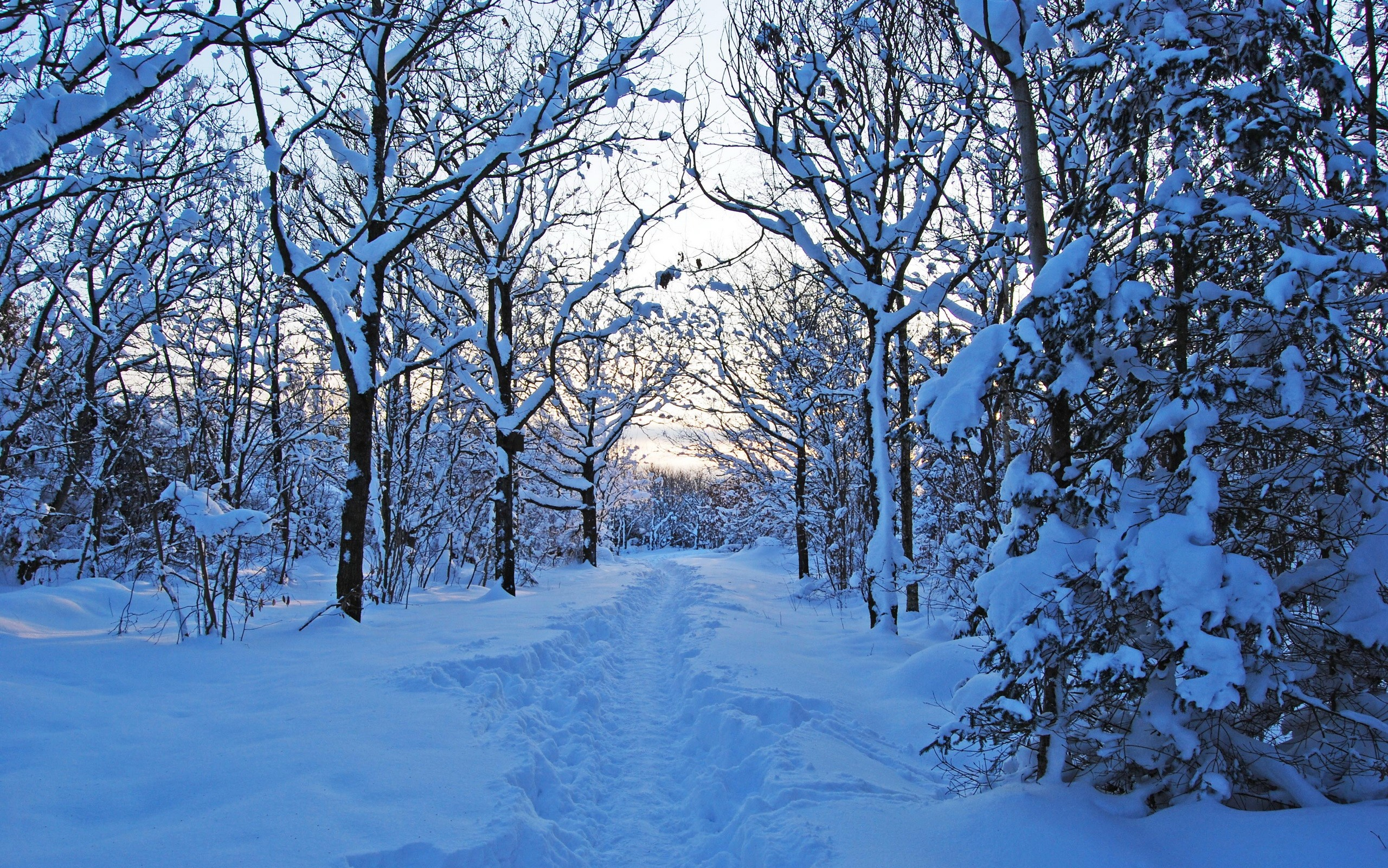 صورة صور فصل الشتاء , الشتاء اجمل فصول السنة