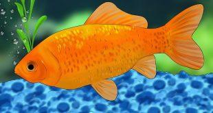 بالصور معلومات عن الاسماك , ما هي فؤائد الاسماك 1691 3 310x165