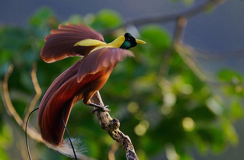 صورة اجمل طيور العالم , شاهد اجمل الطيور فى العالم