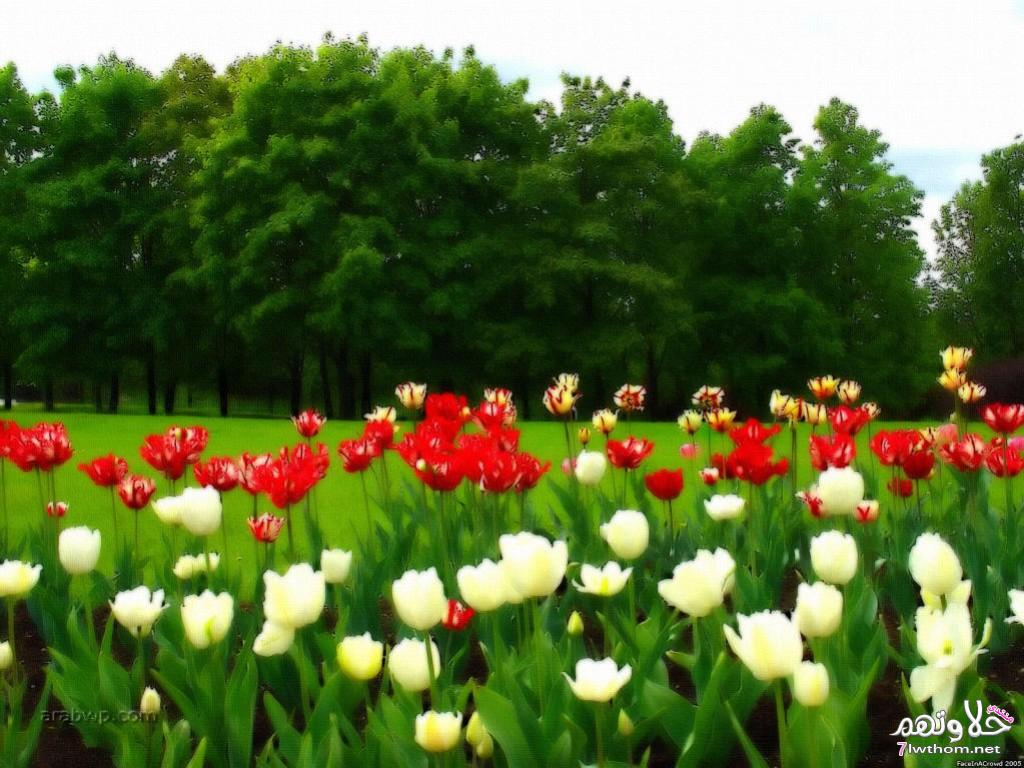 صورة صور فصل الربيع , شاهد صور لفصل الربيع