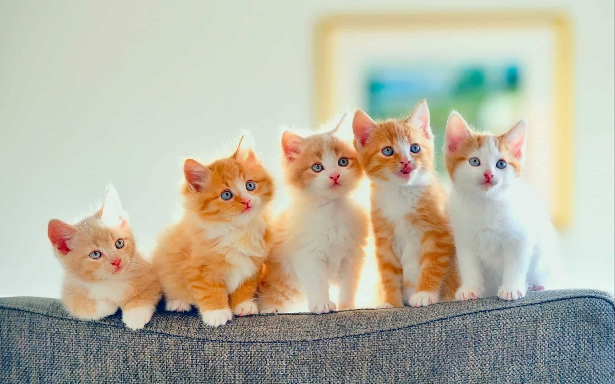 صور صور قطط جميلة , شاهد صور قطط جميلة