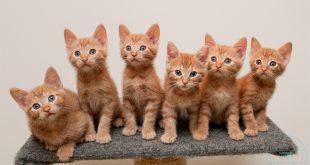 بالصور كيفية تربية القطط , كيف تربي قط اليف في المنزل 1947 3 310x165