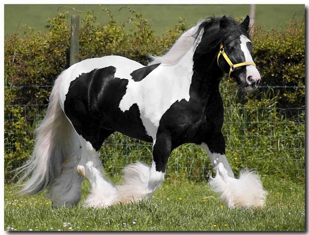 صورة صور حصان , شاهد اجمل صور للاحصنة