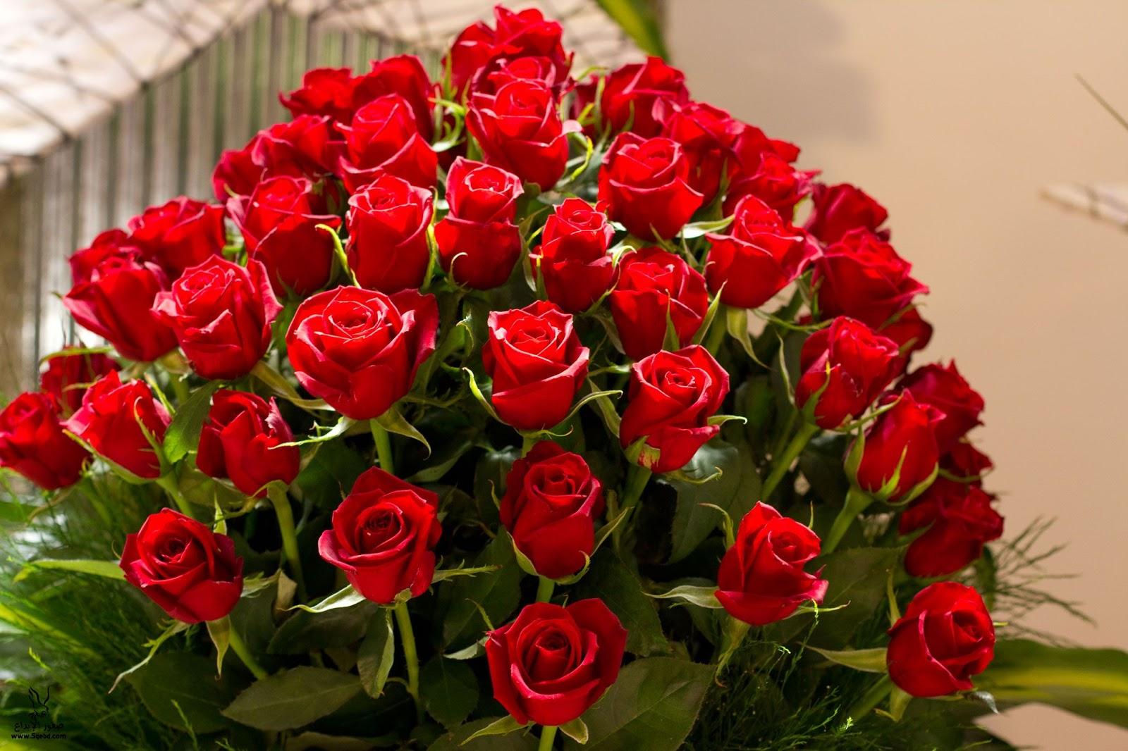 صور صور الورد , جمال الورد واشكاله