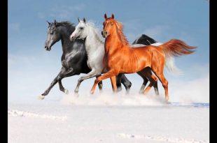 صورة صور خيول , مثل صور الخيل هذه لم اشاهد ابدا