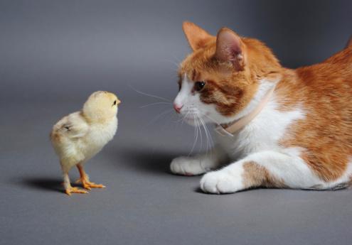صورة القط والتصافير , قصة حب بين قط وعصفور