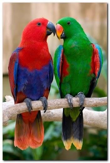 بالصور صور بلابل , صور طيور جميله 3922 3