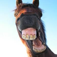 صورة صور حيوانات مضحكة , اجمل الرمزيات المضحكه للحيوانات 4937