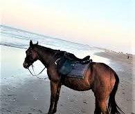 صورة حصان عربي , اجمل حصان فى العالم هو الحصان العربى