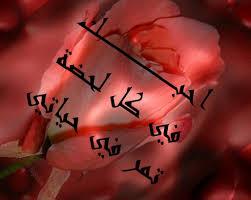 بالصور صور كلام في الحب , كلمات وصور تعبر عن الحب الحقيقى 5125 1