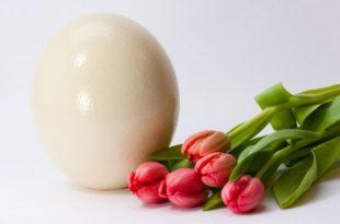 صورة تفسير رؤية البيض في المنام للمتزوجة , تفسير بعض الاحلام للمتزوجه