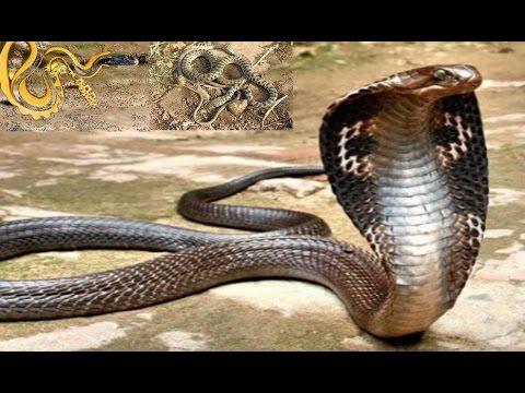 بالصور انواع الثعابين , صور مختلفه للثعابين 6280 1