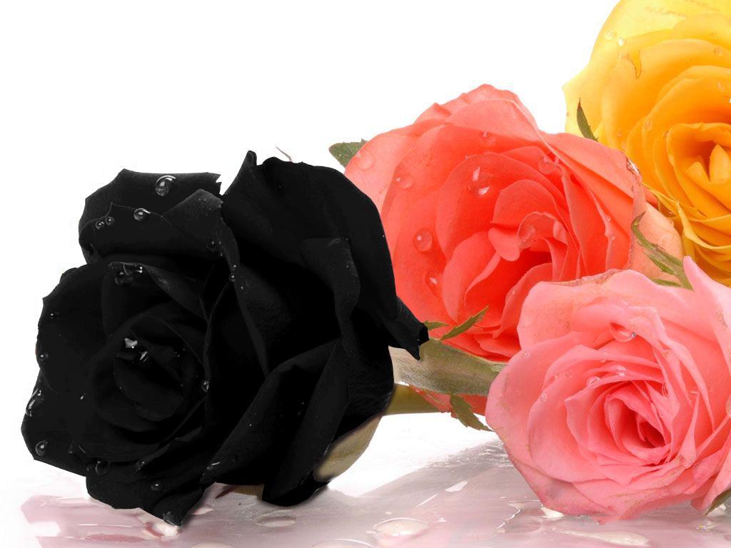 بالصور اجمل ورد , خلفيات رومانسية لاجمل ورود 1007 11