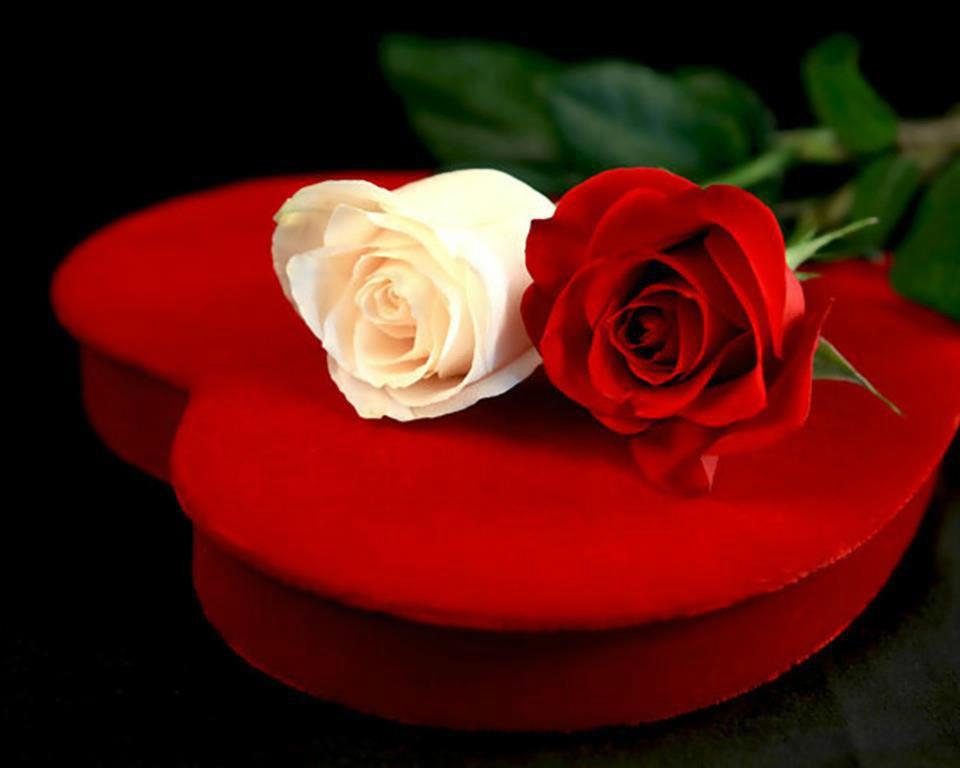 صورة اجمل ورد , خلفيات رومانسية لاجمل ورود