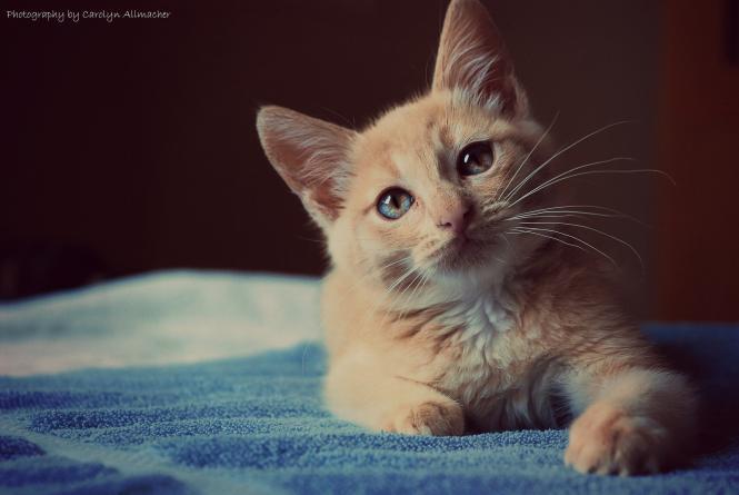 صورة رؤية القطط بالمنام , تفسيرات دقيقه لمشاهده القطط في الحلم