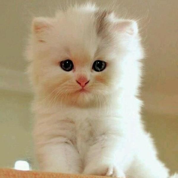 بالصور قطط جميلة , صور قطط بريئة اوى وتجنن 1043 12