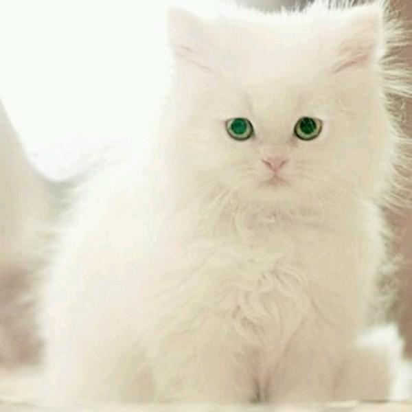 بالصور قطط جميلة , صور قطط بريئة اوى وتجنن 1043 13