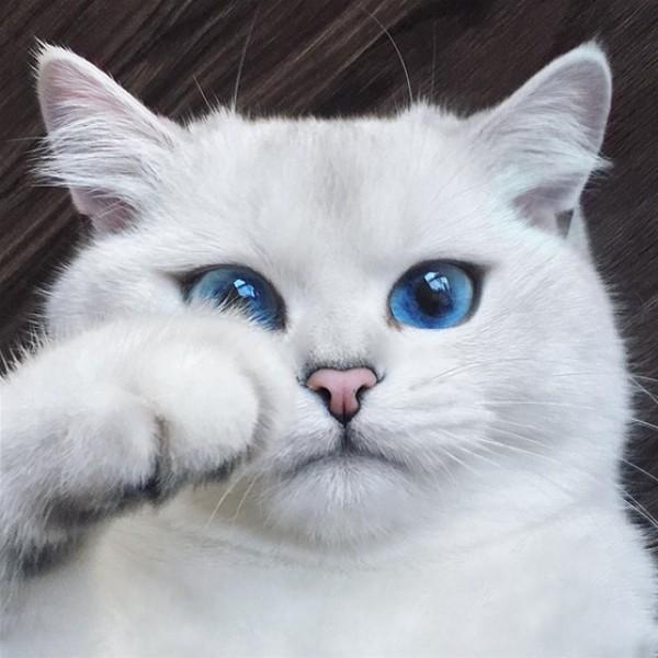 بالصور قطط جميلة , صور قطط بريئة اوى وتجنن 1043 14