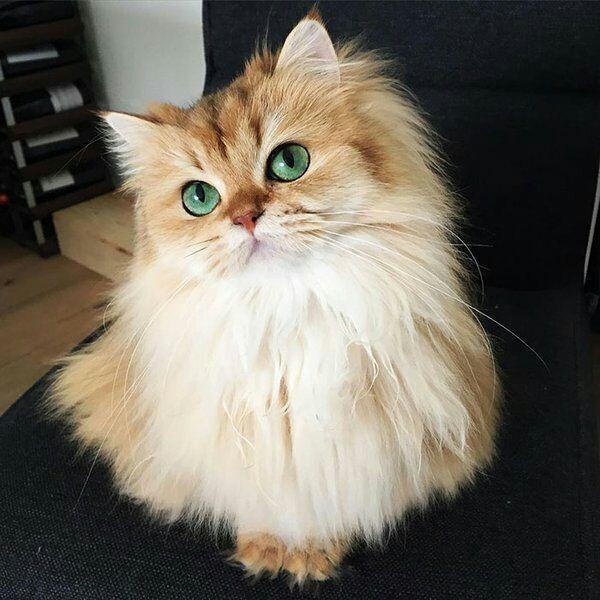 بالصور قطط جميلة , صور قطط بريئة اوى وتجنن 1043 15