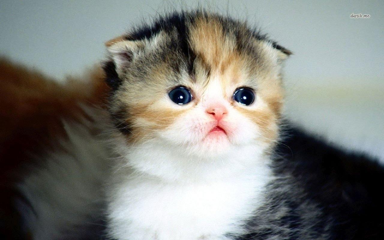 بالصور قطط جميلة , صور قطط بريئة اوى وتجنن 1043 19