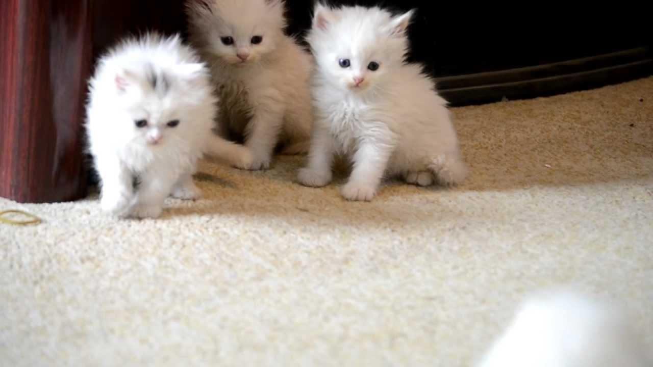 بالصور قطط جميلة , صور قطط بريئة اوى وتجنن 1043 20