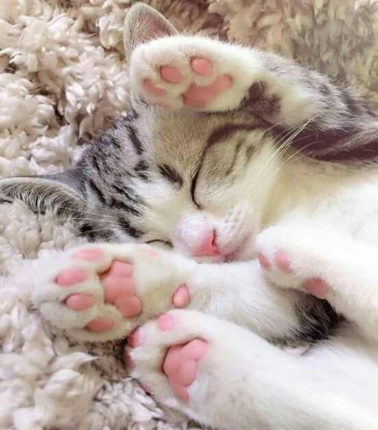 بالصور قطط جميلة , صور قطط بريئة اوى وتجنن 1043 22
