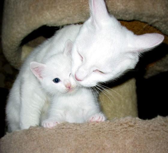 بالصور قطط جميلة , صور قطط بريئة اوى وتجنن 1043 23