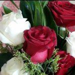 ورد طبيعي , يا جمال الورد البلدي الطبيعي