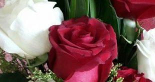 بالصور ورد طبيعي , يا جمال الورد البلدي الطبيعي 192 11 310x165