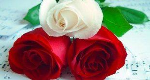 صوره اجمل ورود في العالم , باقة من اروع واحلى الزهور في الكون