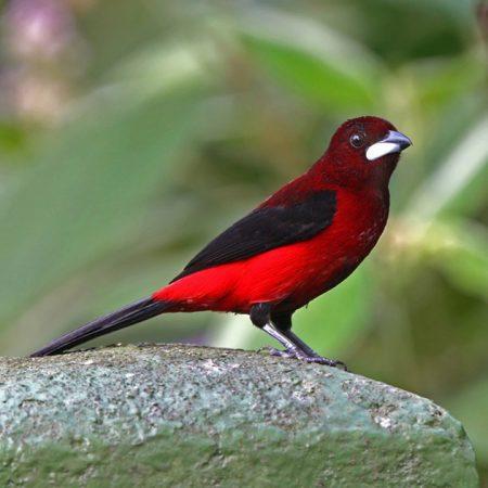 صورة صور طيور , اجمل صور لطيور تجعلك تقول سبحان الله