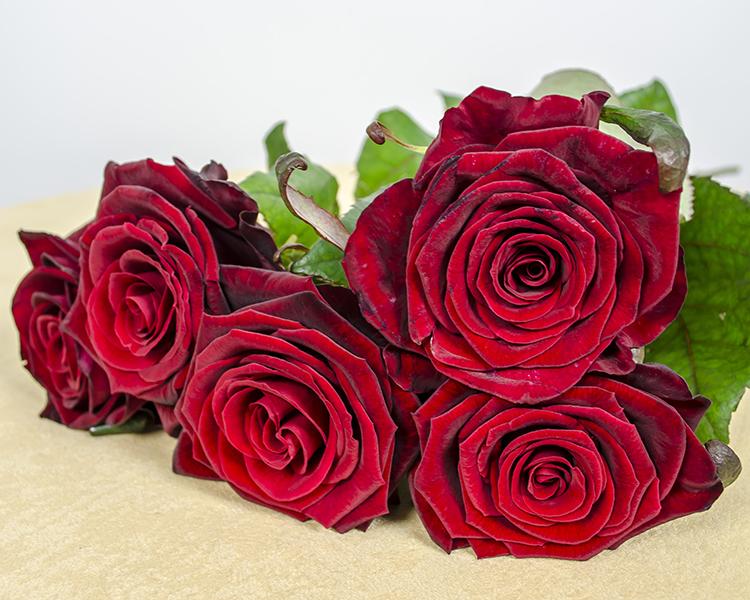 بالصور صور ورد صور ورد , اجمل اشكال الورد والوانه 2659 12