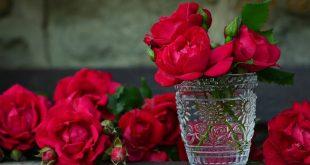 صوره صور ورد صور ورد , اجمل اشكال الورد والوانه