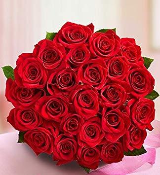 بالصور صور ورد صور ورد , اجمل اشكال الورد والوانه 2659 4