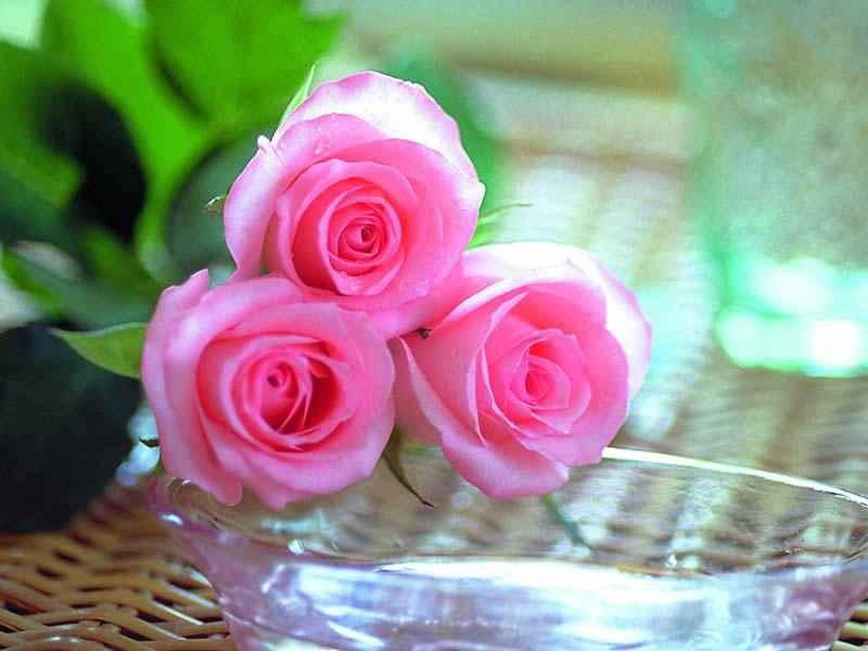 بالصور صور ورد صور ورد , اجمل اشكال الورد والوانه 2659 5